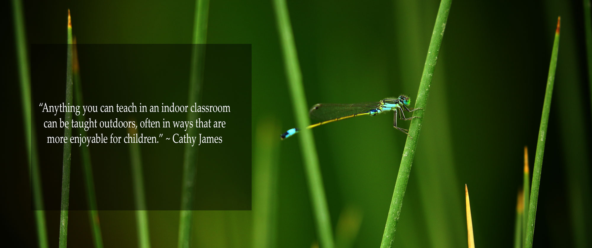 Dragonfly on a stem with quote on the left- Okinja ELC